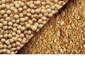 NON GMO Soybean Meal For Animal Feed available for export