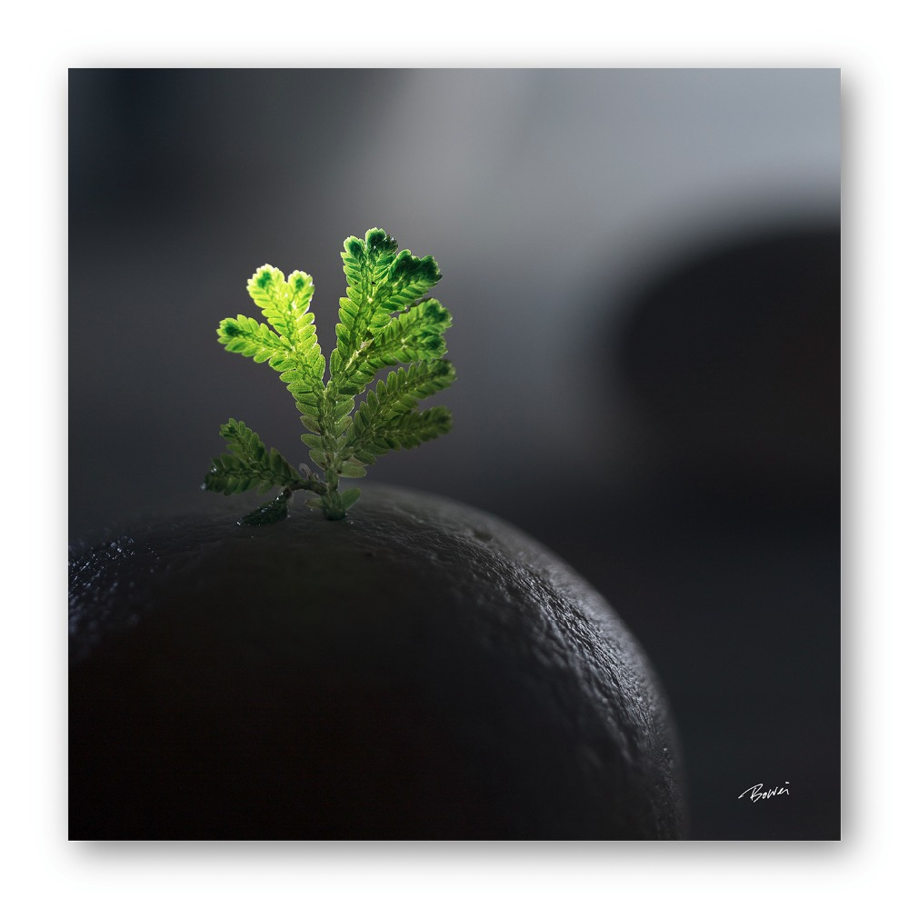 Malaysia Print Plants and Zen Photography Printed on High Quality Photo Paper