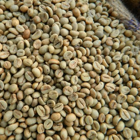 Quality Grade A Green Robusta Coffee Beans