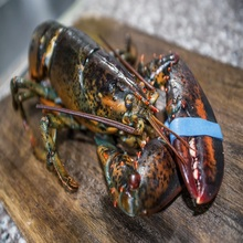 Fresh Frozen Lobsters/Fresh Live Lobsters/Lobsters Wholesale Price