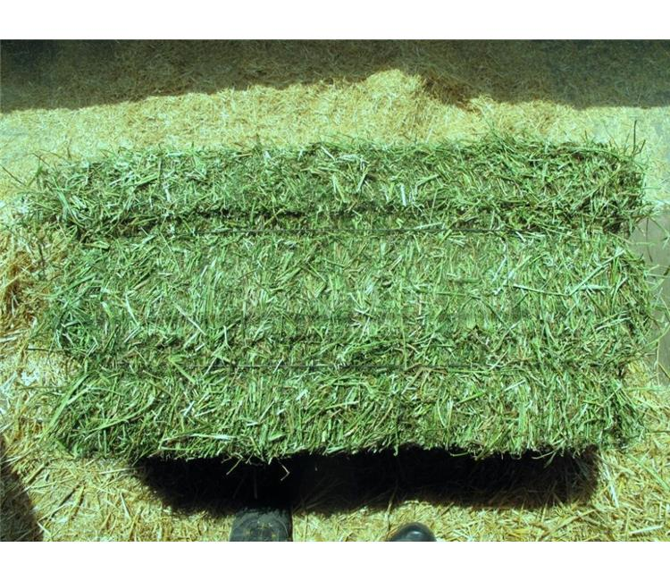 Available quality timothy hay for animal feeding