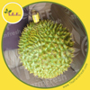 HIGH QUALITY FRESH DURIAN, KANYAO VARITEY, Sounthern THAILAND