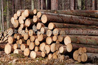 Timber Wood Logs for Sale From Thailand