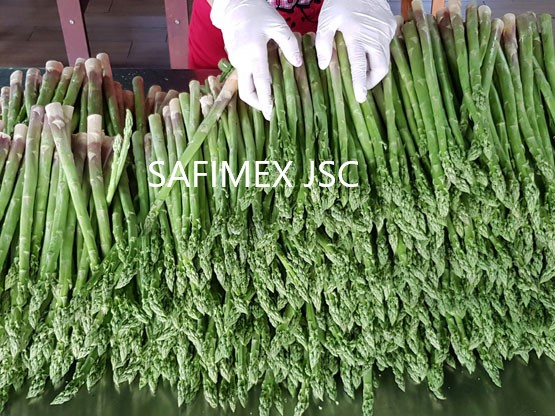 Fresh Asparagus / Asparagus from Vietnam