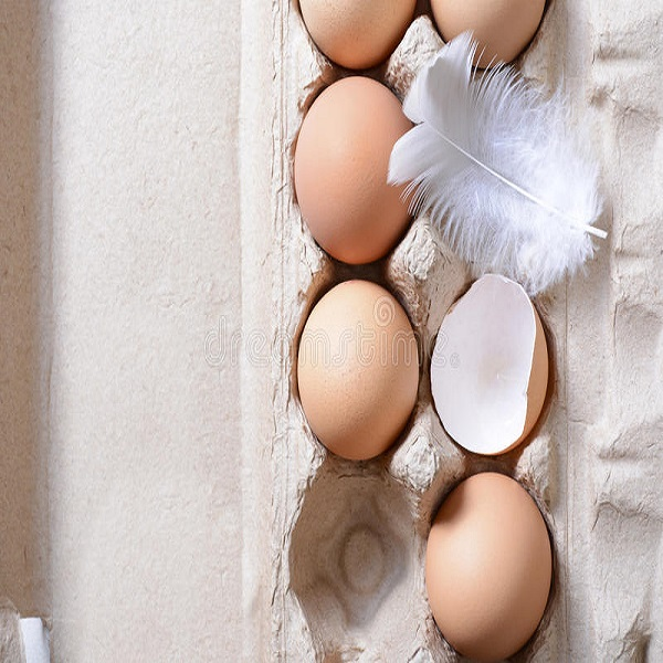 TOP Quality Farm Fresh Chicken Table Eggs Brown and White Chicken Eggs