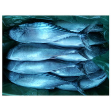 Wholesale New arrival high quality Seafood Whole cheap frozen striped bonito fish for sale
