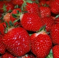 sweet fresh strawberries for sale at good price