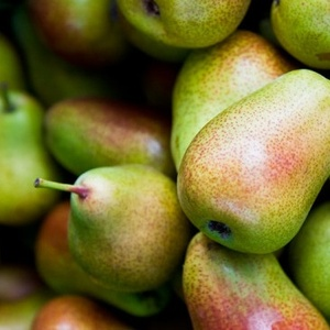 FRESH PEARS _ PEARS FOR SALE _ FORELLE PEARS_Fresh Packham