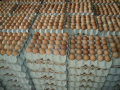 Grade A Quality Chicken Eggs