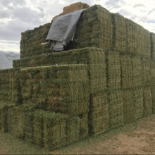 We supply high quality afordable Animal feed alfalfa / alfalfa hay for sale