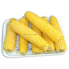 TASTY FROZEN SWEET CORN FROM VIETNAM- THE PRODUCT WITH HOT PRICE