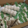 /product-detail/new-crop-pure-white-garlic-from-belgium-62000592883.html