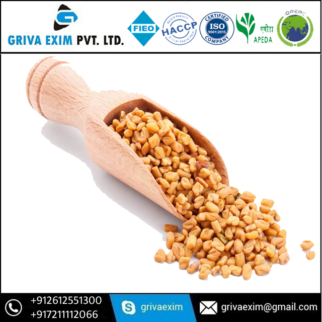 Exporter Of Bold and Java Fenugreek Seed Or Fenugreek Seed