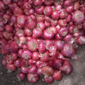 Nasik Onions 5-6 CM for Sale
