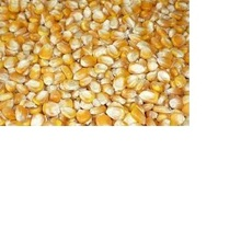 Grade A Yellow corn animal feed