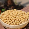 Wholesale organic bulk soybeans seeds with high quality