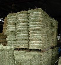 Protein Sun Dried Alfalfa Hay, Alfalfa pellet for Animal Feed