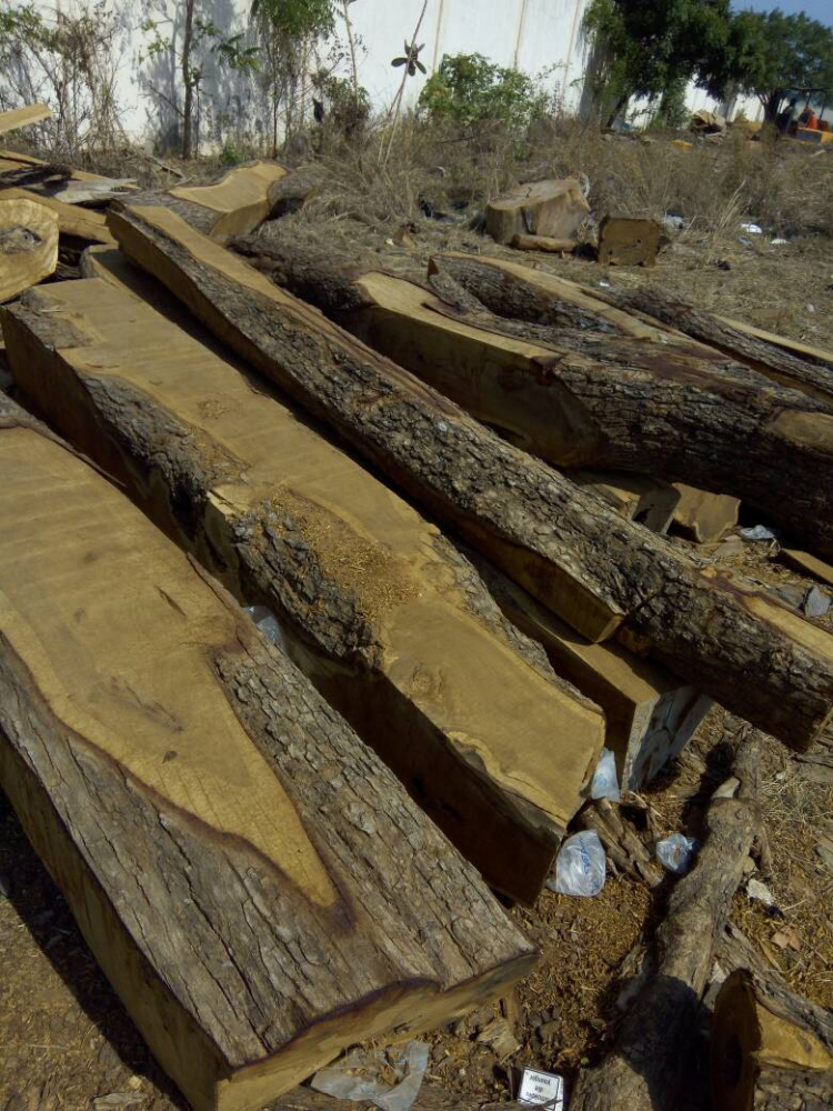 ROSEWOOD & PAPAO TIMBER LOGS
