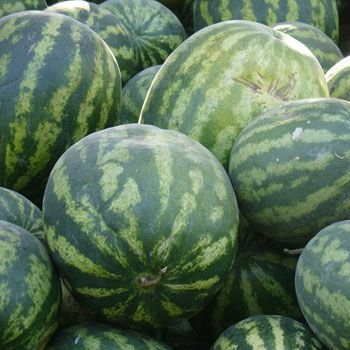 Fresh Watermelon, Fresh Sweet Melons available