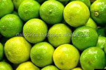 FRESH LIME/FRESH LEMON GRADE A /HIGH QUALITY/BEST PRICE (Vy.dlvina(at)gmail.com)