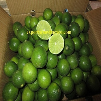 Fresh lemon with best price and quality for sales