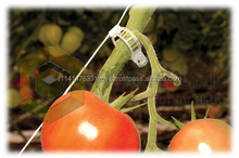 Tomato Clip for hanging and Tie
