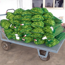 fresh drumstick vegetable to singapore/malysia/srilanka/uk