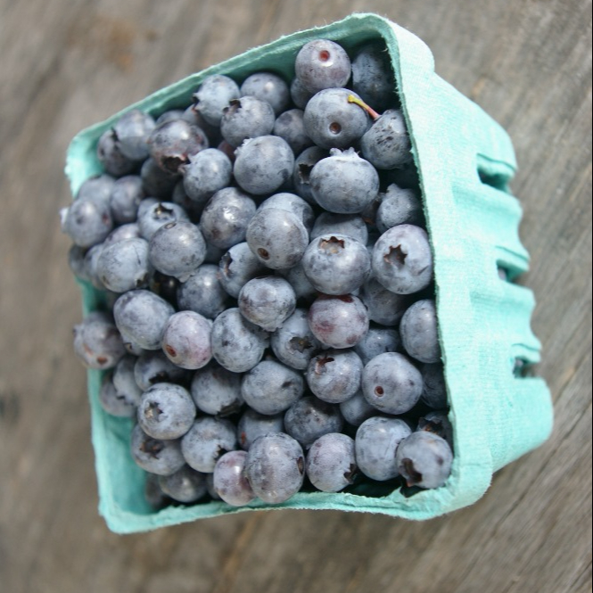 South African Fresh from the farm Blueberries