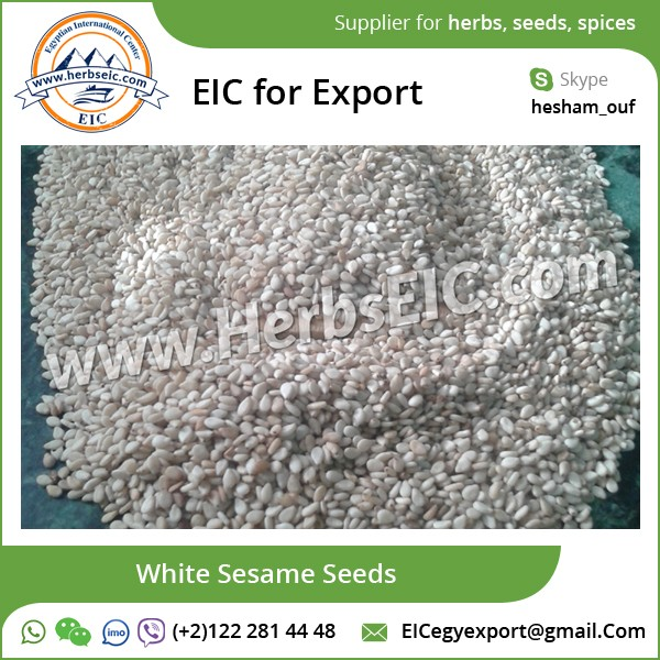 Sesame Seed/ White Sesame Seed for Sale