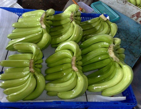 Quality Fresh green Cavendish Banana and other varieties for sale 30% off...