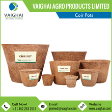 Widely Demanded Biodegradable Coconut Coir Pots for Nursery
