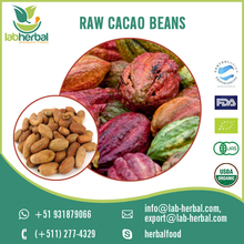 2017 Premium Quality Fresh and Natural Raw Cacao Beans Suppliers