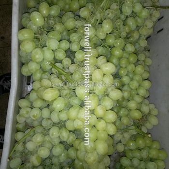 Grapes Type and Citrus Fruit Product Type Navel and Valencia Maroc Late