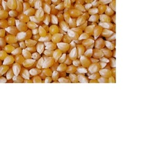 Animal feed 20 ppb Yellow corn ready for export