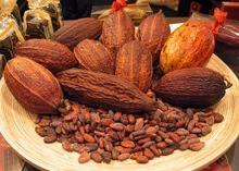 organic cacao/cocoa beans/nibs/pods from farm low price/