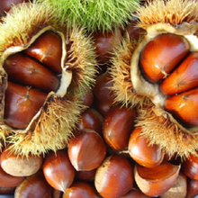 Korean natural sweet high quality organic chestnuts for wholesale