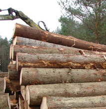 Ash Timber Round Logs for sale