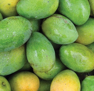 Sweet Mangoes From Vietnam