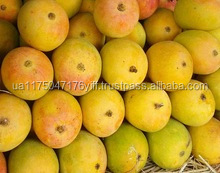 Fresh Mango Best Price