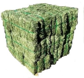 QUALITY ALFALFA DOUBLE COMPRESSED BIG BALES