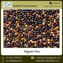 Good Quality Fresh Dried Pigeon Pea Seeds