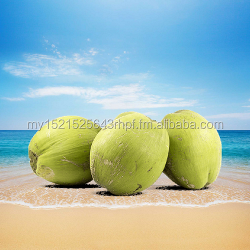 Fresh Young Coconuts from Malaysia