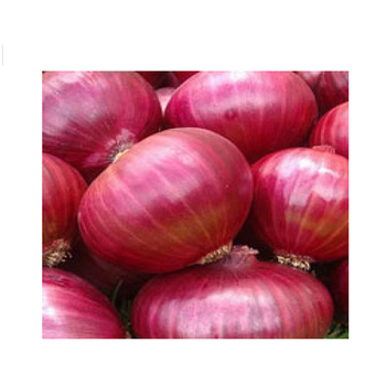 Onion Offer In Jute Bag And Vacuum Pack Bag