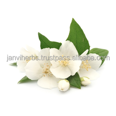 100% pure manufacture and wholesale supplier For Private Labeling Jasmine Grandiflorum Essential Oil/Bulk jasmine Oil