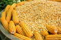 Grade 1 Yellow Corn & White Corn/Maize for Human & Animal Feed
