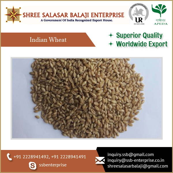 Non Machine Clean Indian Wheat Grain Available at Affordable Price for Sale