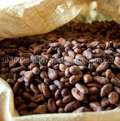 GMP, HACCP, ISO Certified Premium cocoa bean P.E. high quality extract powdered cocoa bean SGS Certified