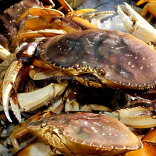 Fresh Quality Frozen Canadian Lobster,Pacific Canadian Red Lobsters,Seafood Fresh and Frozen