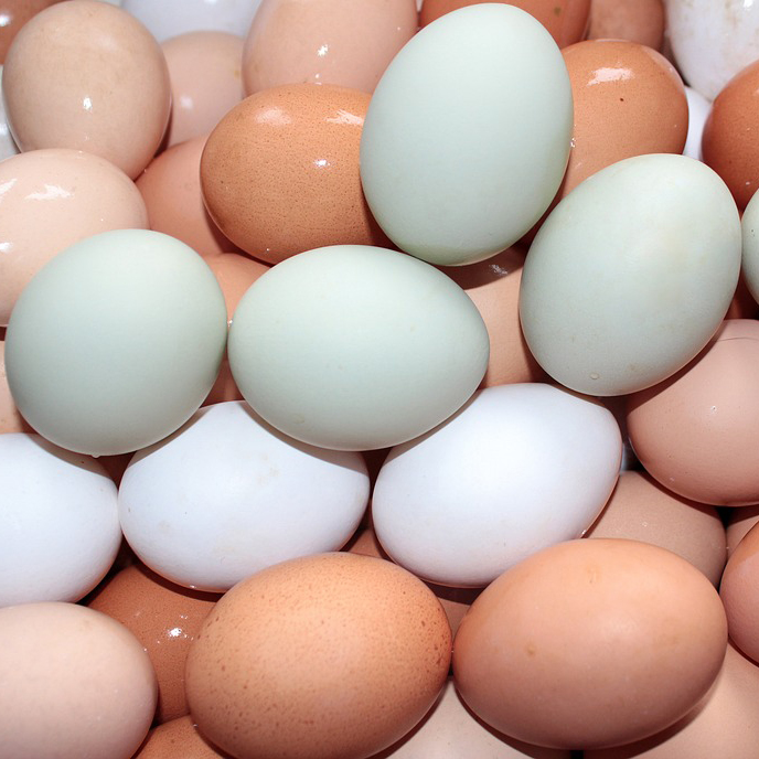 Farm Fresh White and Brown Chicken Table Eggs from Turkey