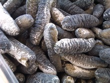 Good Quality Dried Black Teat Sea Cucumber for Sale